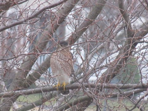 12/3/14 Chester, Birds, Squirrels, Bolete, Yianni's, Slate Bleu